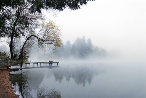 Serenity in the Fog